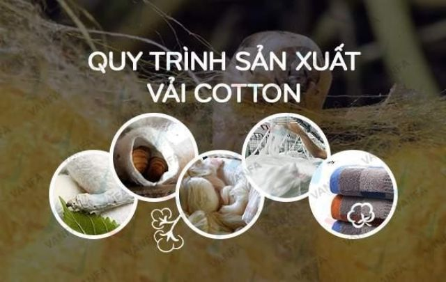 Quy trình sản xuất vải cotton